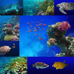 Unterwasser Fotografie von Tina Melz